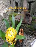 Adimu: Nuevas recetas para los Orishas