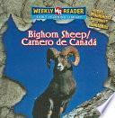 Bighorn Sheep / Carnero De Canada