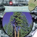 Cómo crecen los pinos (How Pine Trees Grow)