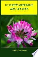 Las plantas medicinales más eficaces