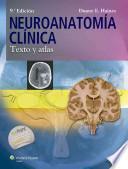 Neuroanatoma clnica / Clinical Neuroanatomy